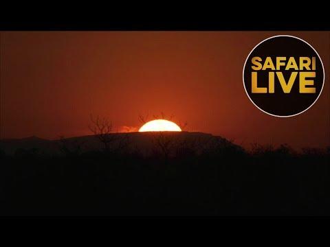 safariLIVES: Episode 13