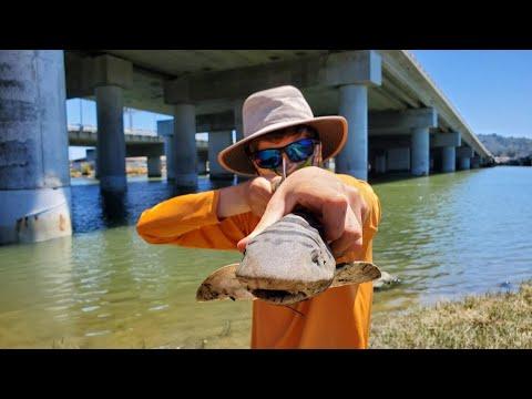 Leopard Shark Fishing San Francisco Bay   Corte Madera Creek Marin