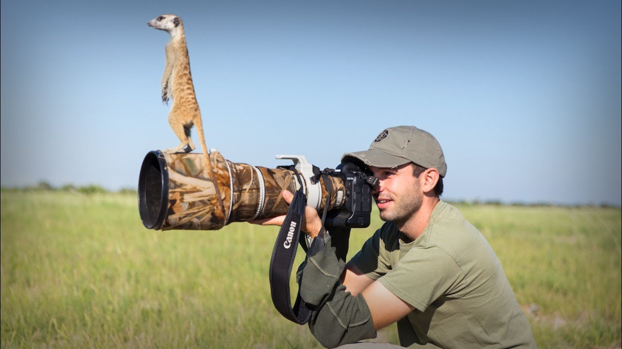 Cute Meerkats Use Photographer As A Lookout Post - YouTube