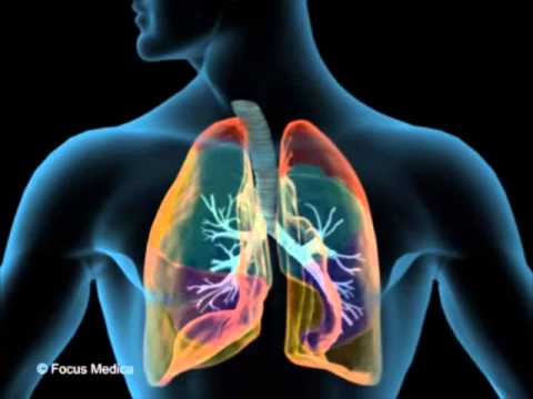 Lungs anatomy youtube lungs anatomy ccuart Choice Image