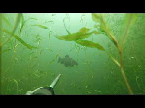 подводная охота в ленинградской области запрет