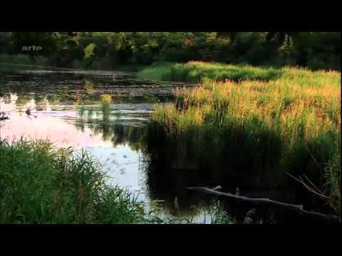 Films documentaires : Le Danube, Une Source De vie Au Coeur De L Europe Doc Nature