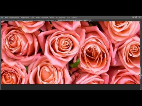 Фотообои Розы в интерьере кухни, спальни, гостиной фото
