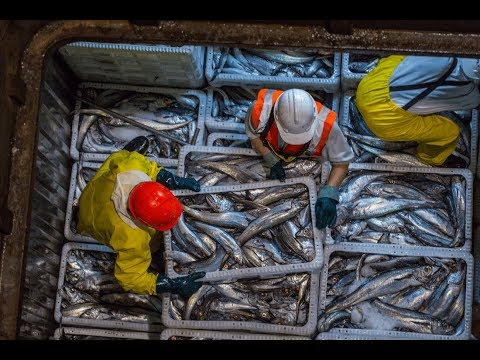 Big Vs Small Fishing Boats: Which Is More Sustainable?