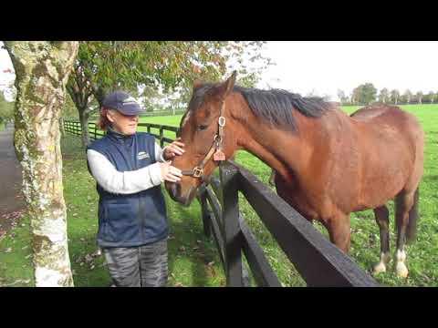The Irish National Stud, Tuesday 10-October-2017, video 1