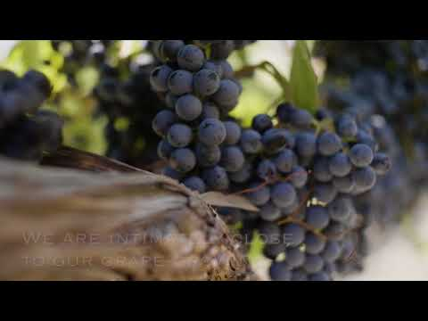 Red Blend Wine Tasting Notes - CK Mondavi and Family Wines
