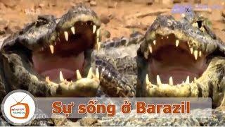 Sự Sống Của Thiên Nhiên Ở Barazil l 🐘 Động Vật Hoang Dã   🔊 Thuyết Minh