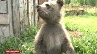 Новость года от телезрителей ОТВ: спасение медвежонка