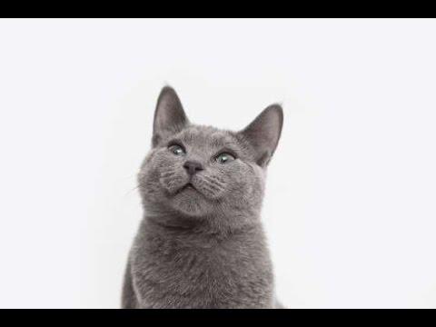 【衝撃】1千万円超も!!? 高額猫トップ20