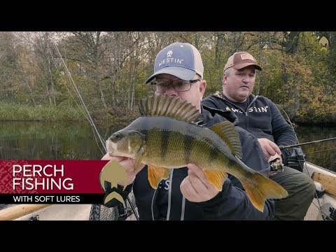 Perch fishing with soft lures - Westin-Fishing