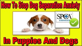 ★★ How To Train A Dog With Separation Anxiety [spca Endorsed] Stop Dog Separation Anxiety Quickly ★★