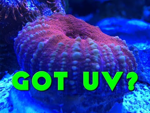 Got UV?  I Do!  Let Me Tell You A Little Bit About It....