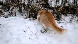 тигр на охоте 3(кот поймал мышь., 2015-11-17T14:25:34.000Z)