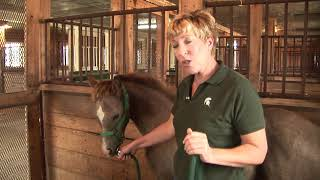 Controlling Your Foal
