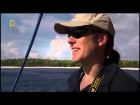 Pacific Ocean Paradise   Nature Full Documentary