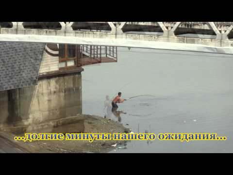 Сом у моста Поцелуев. Краснодар. 09.09.14