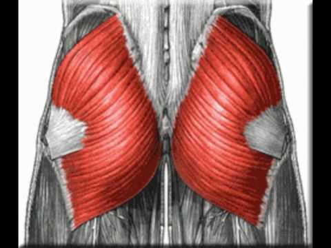 Gluteus Maximus - Functional Anatomy - YouTube