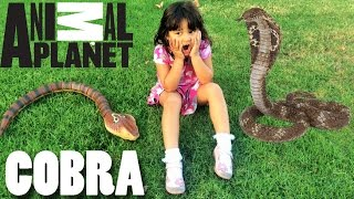 King Cobra Snake Toy Animal Planet Remote Control Toy Animal Toys