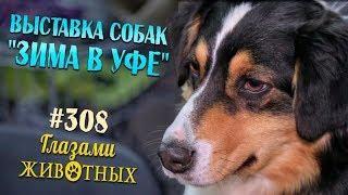 Глазами животных #308. Выставка собак