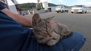 ベンチで野良猫が寝ていたので隣に座ってみたら膝の上に乗ってきた