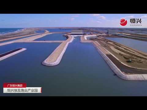 Chinese-built Tilapia Farm In Egypt