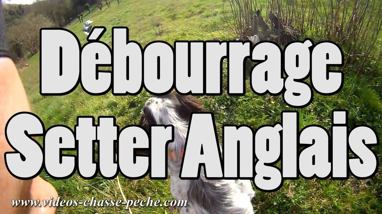 Dressage chien Setter Anglais (débourrage) - Drift HD