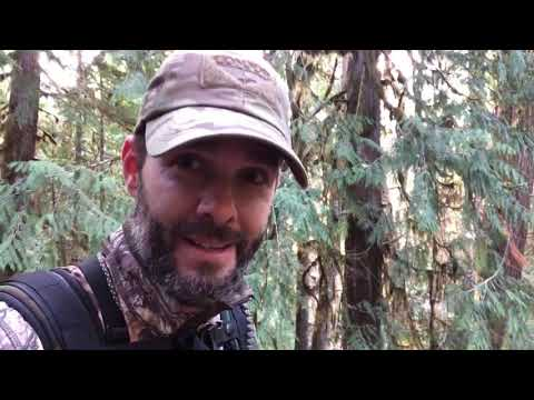 The Bearded HoneyBadger  Bow Hunting Blacktail