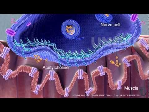 Understand.com | New Botulinum Toxin Procedure - Highlight Reel