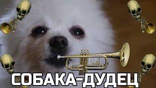 Gabe The Dog (Мистер Дудец)