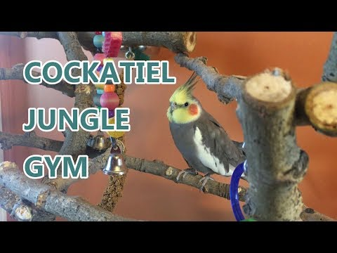Mikey the Cockatiel's  Homemade Tree | Made From Poplar Branches