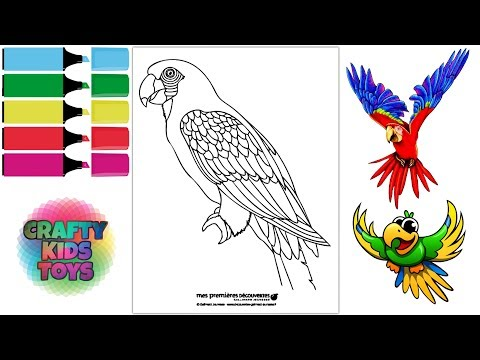 Parrot Birds Coloring Page Fun Coloring Pictures For Kids Papagei