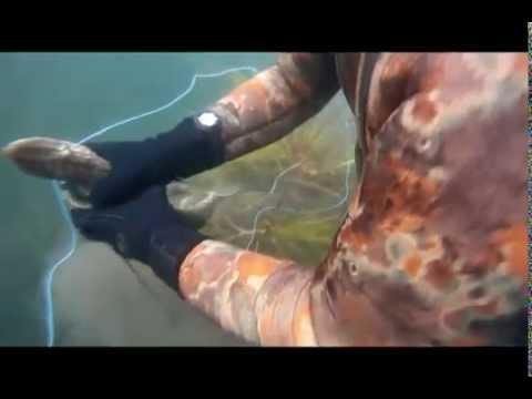 Подводная охота на озере Тургояк 25.06.12г. - YouTube