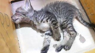 Kitten Found Dumped in Cardboard Box Getting Rescued – Heart Touching Story