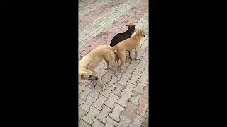 Funny Dogs | Three dogs lock