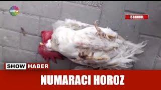 Numaracı Horoz!