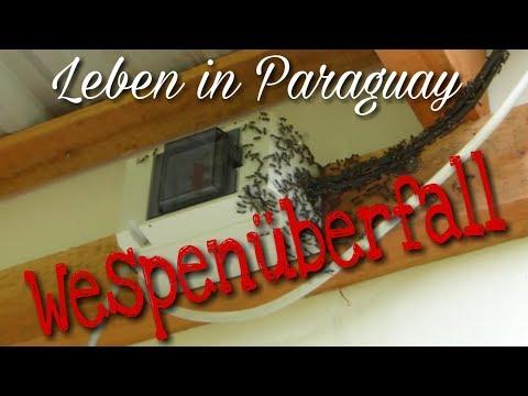 Leben in Paraguay - Insektenplage 1. Teil