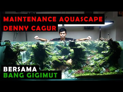 tips-aquascape-pemula-#1-cara-merawat-aquascape-denny-cagur-supaya-cakep-banget...