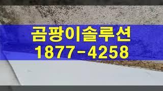 동탄 곰팡이제거, 오산시 바닥 곰팡이페인트 시공(단열)…