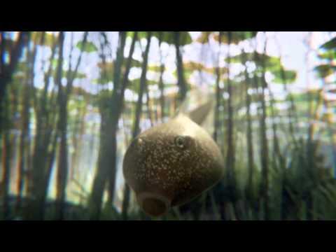 Leo Burnett - Freeview - Tadpoles