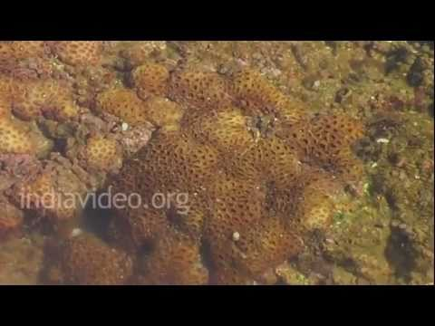Crab Hunting, Veraval Beach