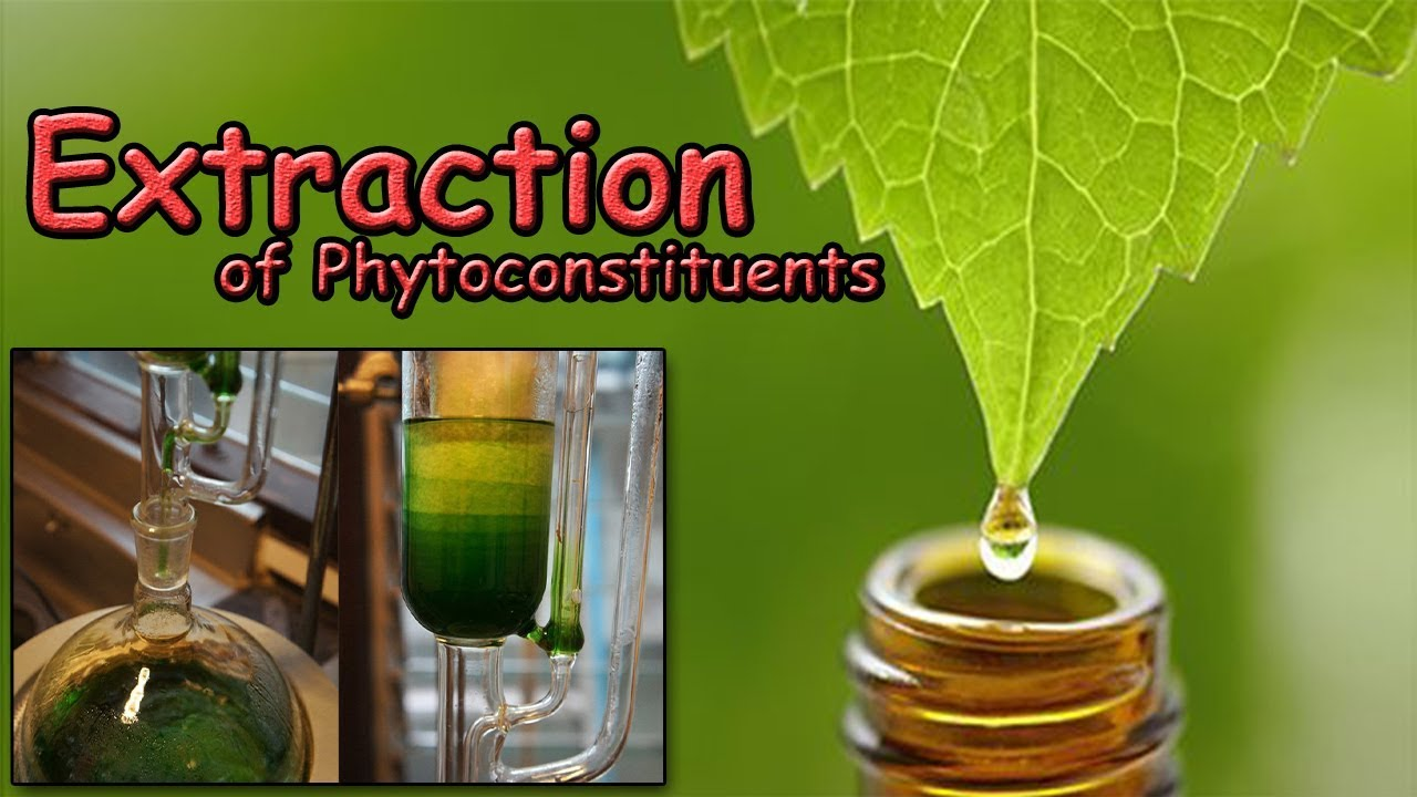 Extraction Of Phytoconstituents Youtube