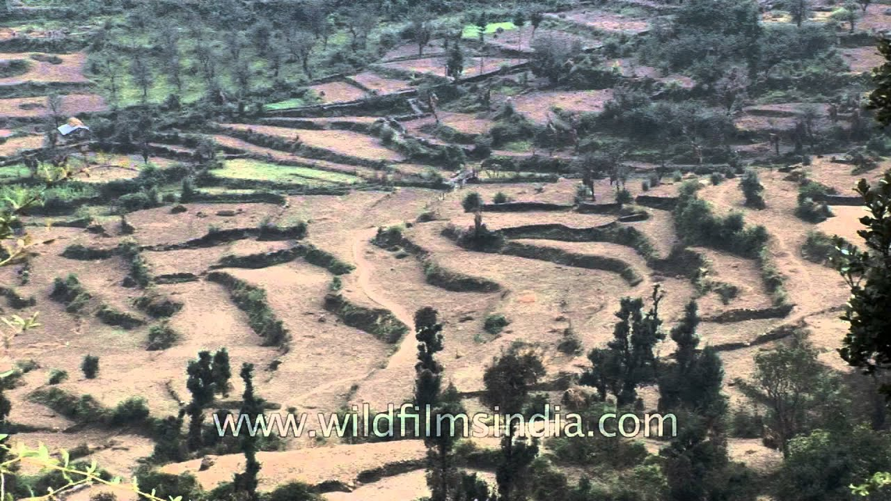 Terracing definition in agriculture my home idea design for Terrace farming meaning