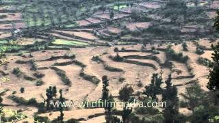 Terrace farming on the mountain slopes of Uttarakhand