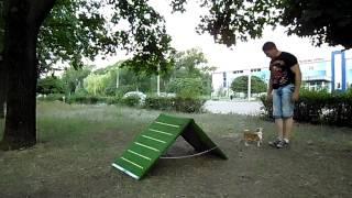 видео Цирковая дрессировка собак юными кинологами