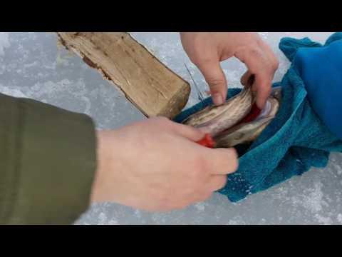 ловля сига зимой в финляндии