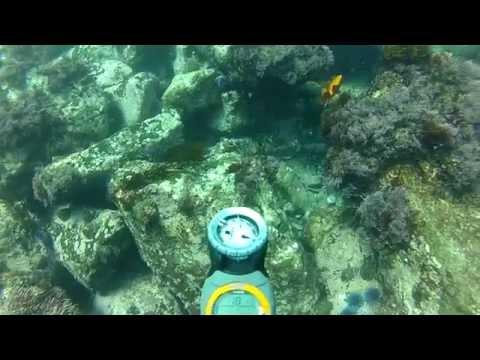 Leopard Shark Dive - Laguna Beach - Cresent Bay