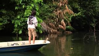 #004 マレーシアの熱帯雨林に潜む虹色の雷魚を求めて
