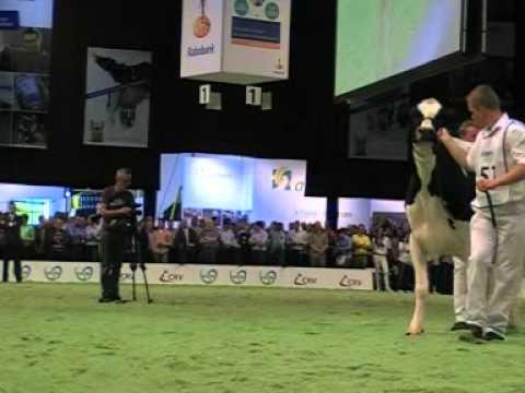 Holstein Master Sale Nr. 07