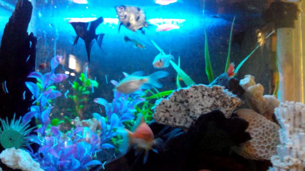 Desain Aquarium Cantik