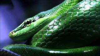 Babak Shayan feat. Strict Border - Snake In The Grass (Original Mix)